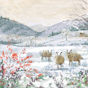 Sheep in Snow cards (Pack of 10)