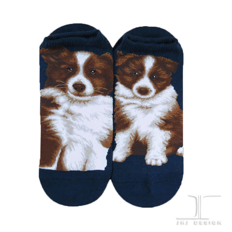 Dogs Ankles - Border Collie