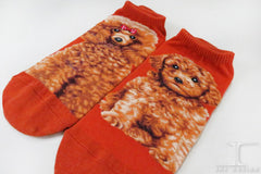 Dogs Ankles - Red Poodle