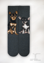 Dogs - Chihuahua Men Size