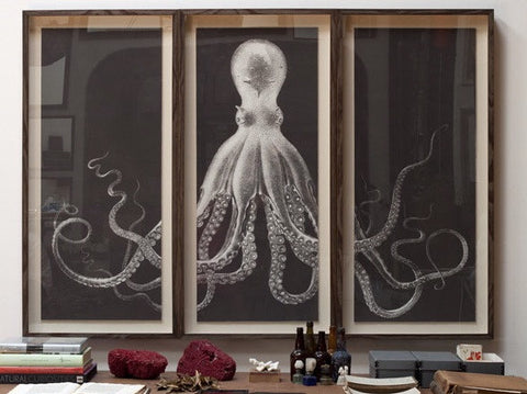 Lord Bodner's Octopus Study - Triptych and Single Art -  Natural Curiosities