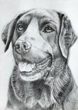 Pet Portrait Diploma