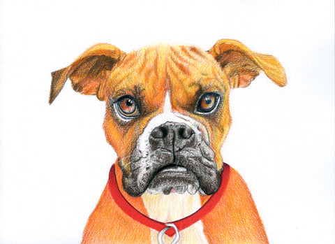 Red Brush Art Pet Portrait Bulldog Drawing
