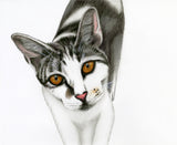 Red Brush Art Pet Portrait Cat Drawing