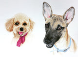 Red Brush Art Pet Portrait Dog Drawing