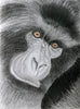 Red Brush Art Animal Portrait Gorilla Drawing