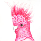 Red Brush Art Pet Portrait Galah Drawing