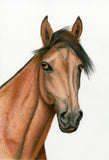Red Brush Art Pet Portrait Horse Drawing