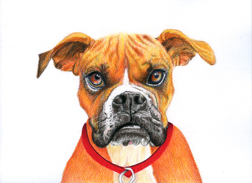 Red Brush Art Pet Portraits