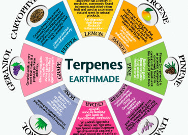 15 terpenes in cannabis explained