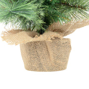 close up detail of mixed pine tree in hessian jute bag