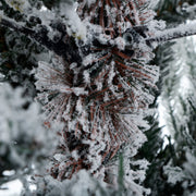 close up detail of snow flocked branches