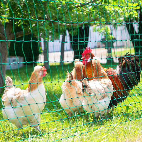Electric Poultry Netting Rotational Grazing