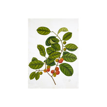 Load image into Gallery viewer, Framed Botanical Print #6