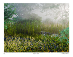 Desert Pond Dawn Signed and Numbered Giclée Print