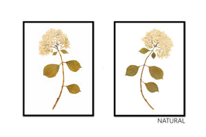 Dried Hydrangea Pair No. 1
