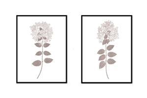 Dried Hydrangea Pair No. 2