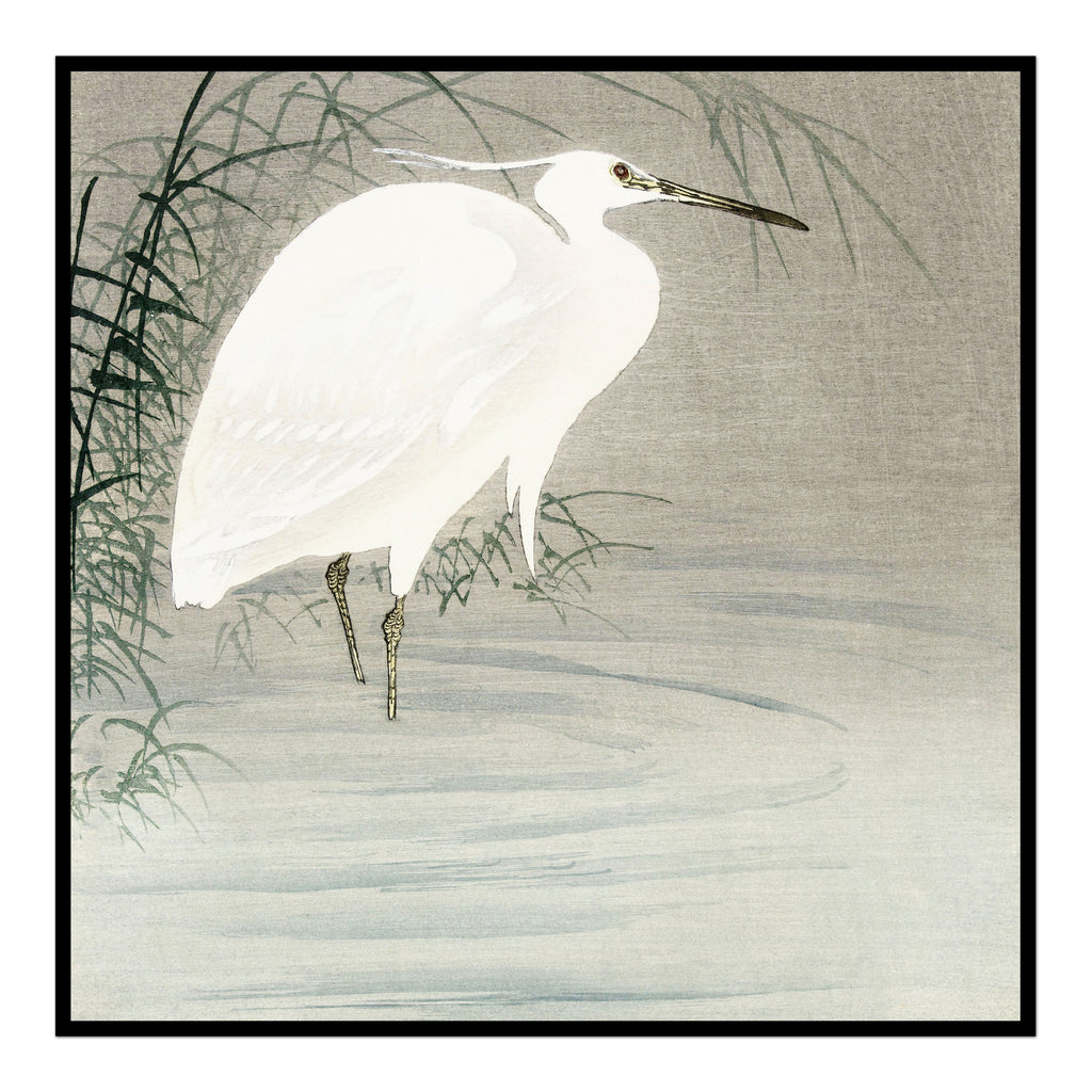 White Crane in the Reeds