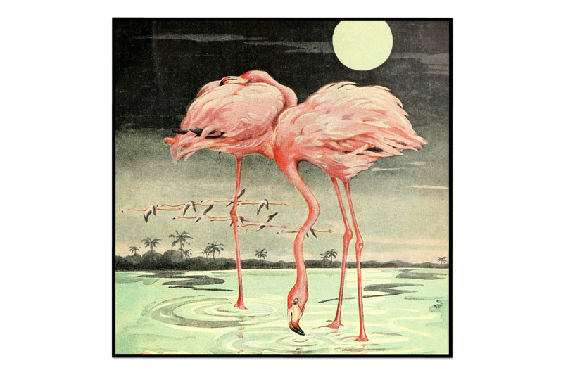 Vintage Flamingo At Night