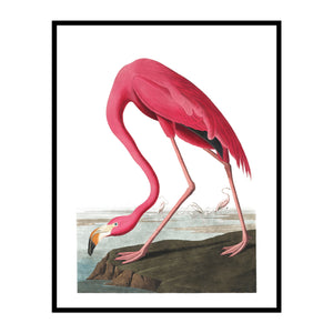 Vintage Flamingo on the Rock