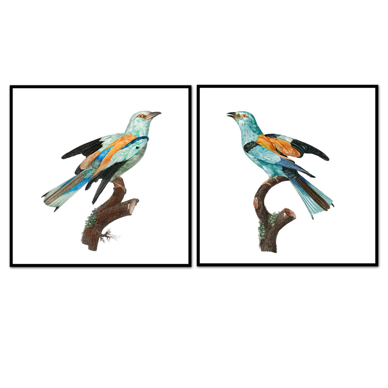 Birds of Turquoise Pair No. 1
