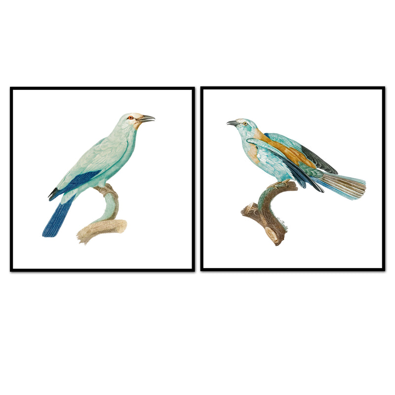 Birds of Turquoise Pair No. 2