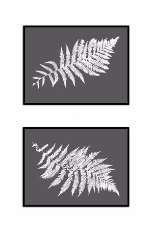 Australian Tree Fern Pair