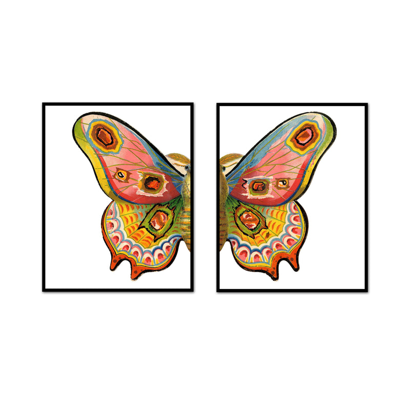 Multicolored Moth Split