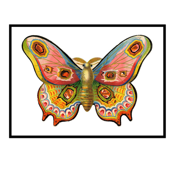 Multicolored Moth