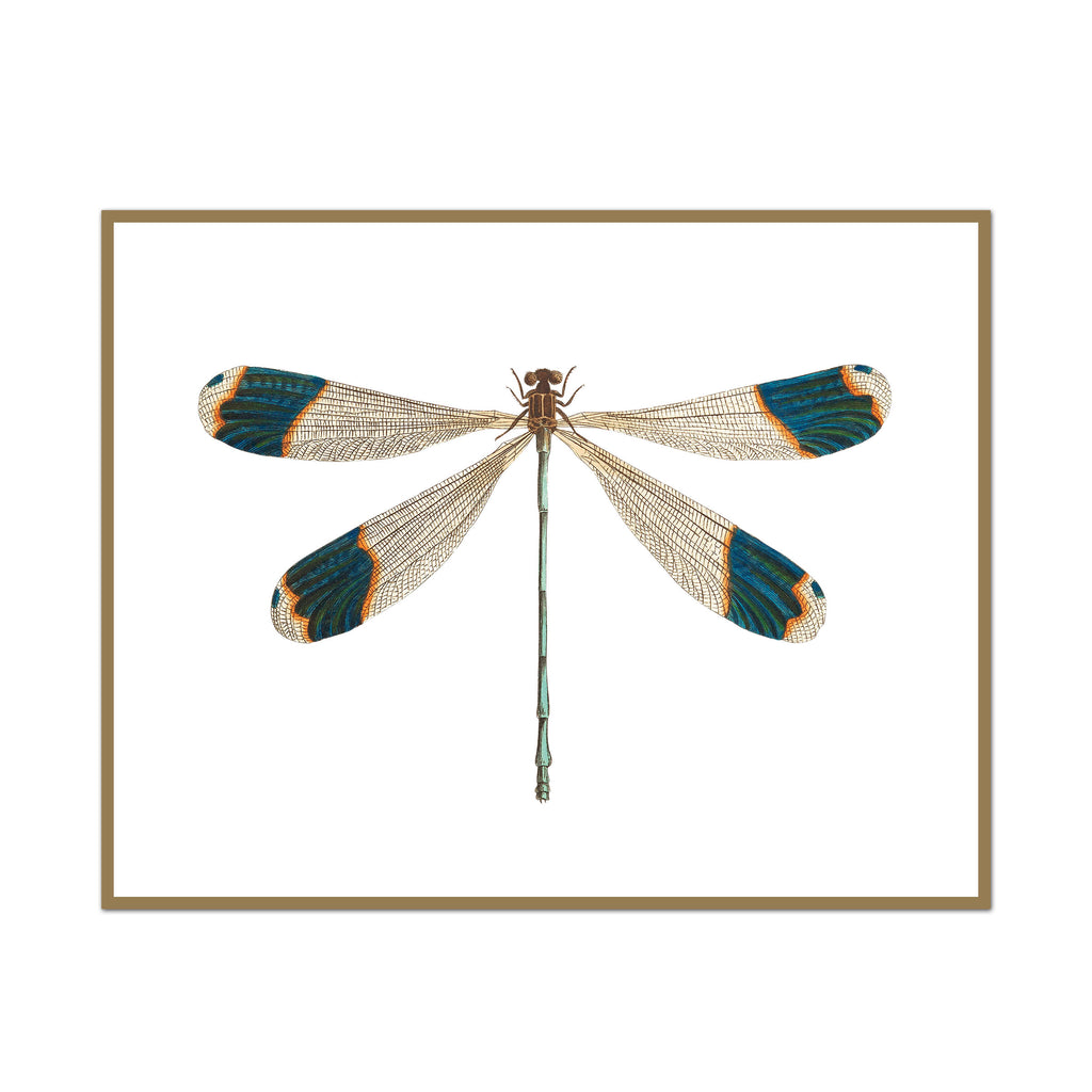 Teal Tipped Dragonfly