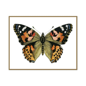 The Painted Lady Butterfly