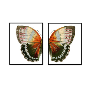 Vintage Earth Butterfly Split