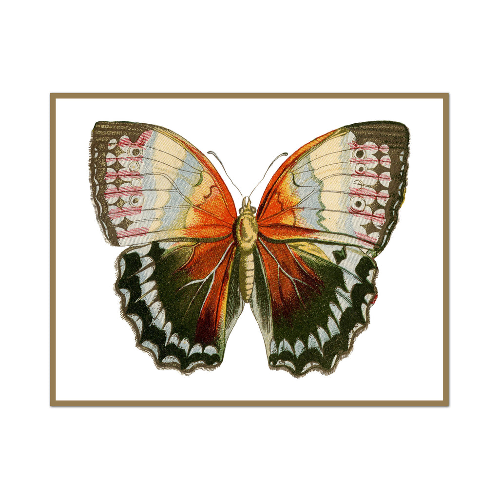 Vintage Earth Butterfly