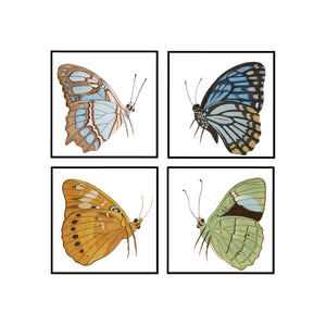 Butterfly Flight Set of 4