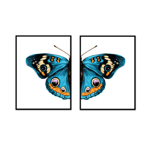 Blue Beauty Butterfly Split