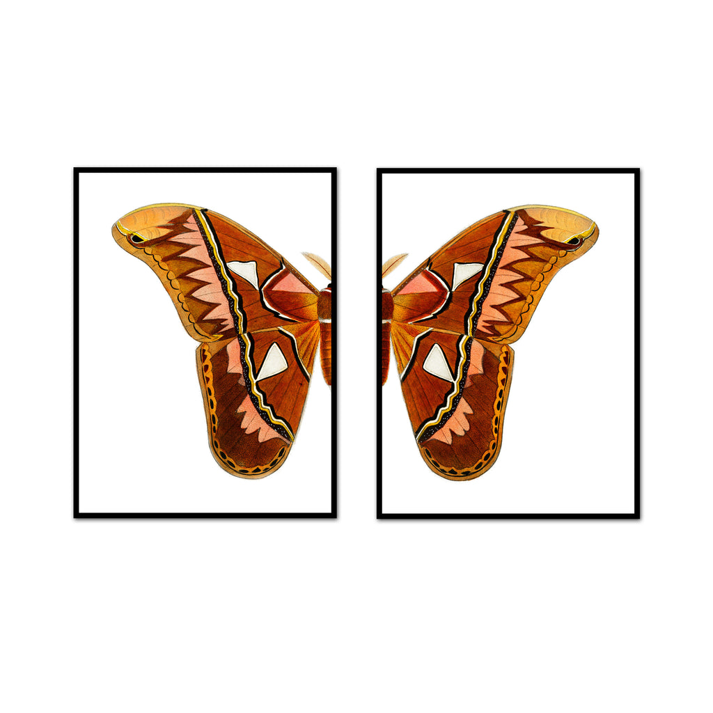 Desert Air Butterfly Split