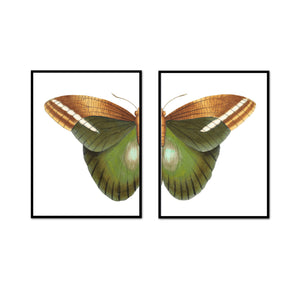 Natural Beauty Butterfly Split