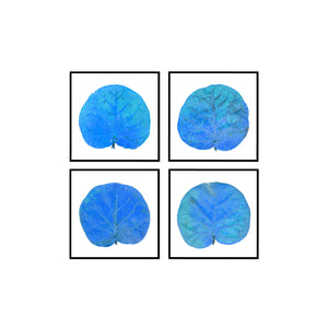 Seagrape Leaf Set of 4