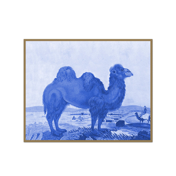 Vintage Camel Drawing