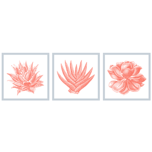 Succulent Illustration Set of 3