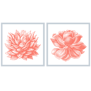 Succulent Illustration Pair