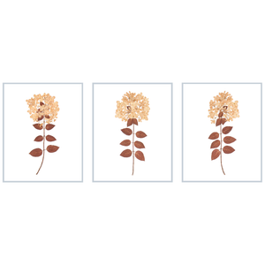 Dried Hydrangea Trio No. 2