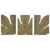Fatsia Leaf Closeup Set of 3