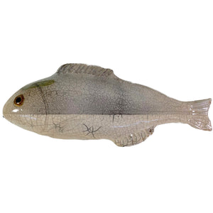 Dorade Fish in Grey