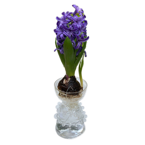 Ricochet Clear Glass Bulb Vase