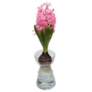Spotswood Clear Glass Bulb Vase