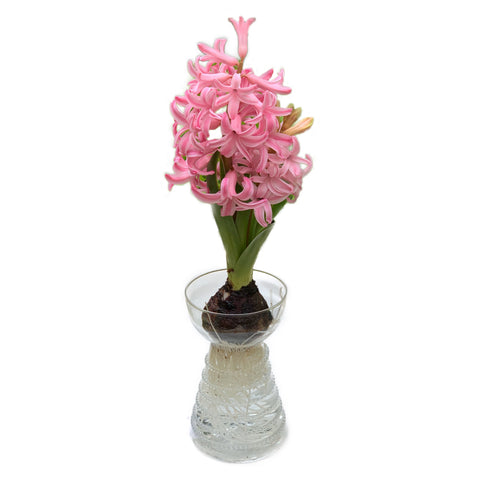 Reny Clear Glass Bulb Vase