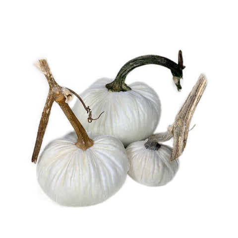 Ivory Velvet Pumpkin Patch