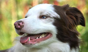 #SMILE, #bad breath      Dental Care Tips for Your Pet