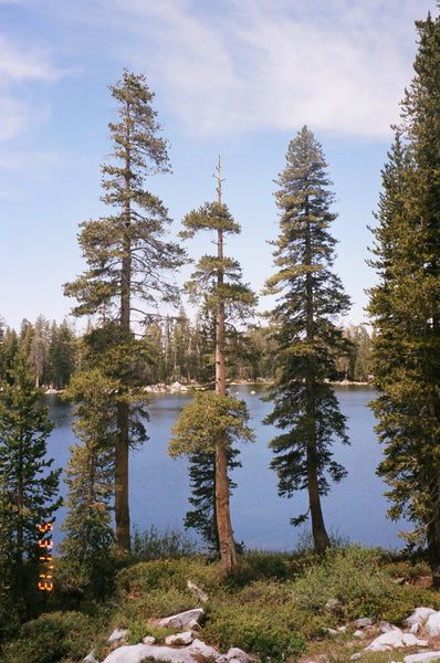 Beautiful big trees and a body of water in Sequoya National Park